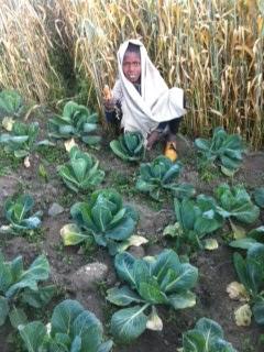 first crop Nov '16